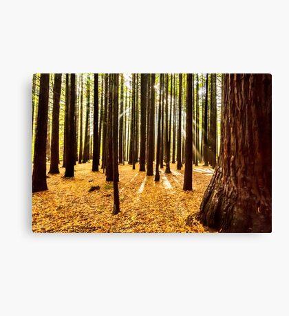 Beams & Trees Canvas Print