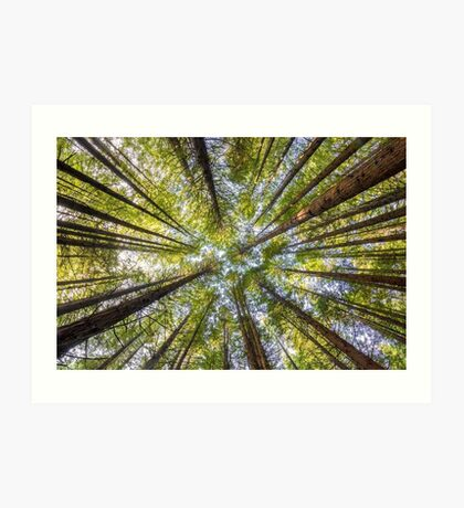 Redwood Heaven Art Print