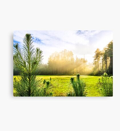 Early Morning Country Walk Canvas Print