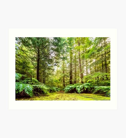 Green Wonderland of Whakarewarewa Forest Art Print