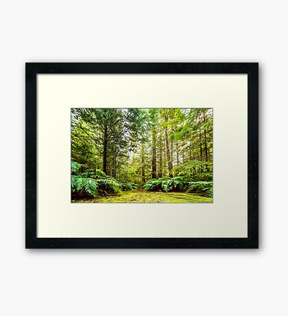 Green Wonderland of Whakarewarewa Forest Framed Print