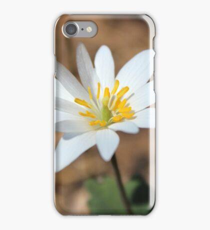 Bloodroot, Sanguinaria canadensis iPhone Case/Skin