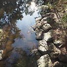 Gardiner's creek by jayview