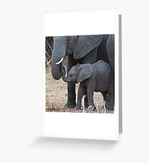 Love & Trust - Mother & Baby African Elephants Greeting Card