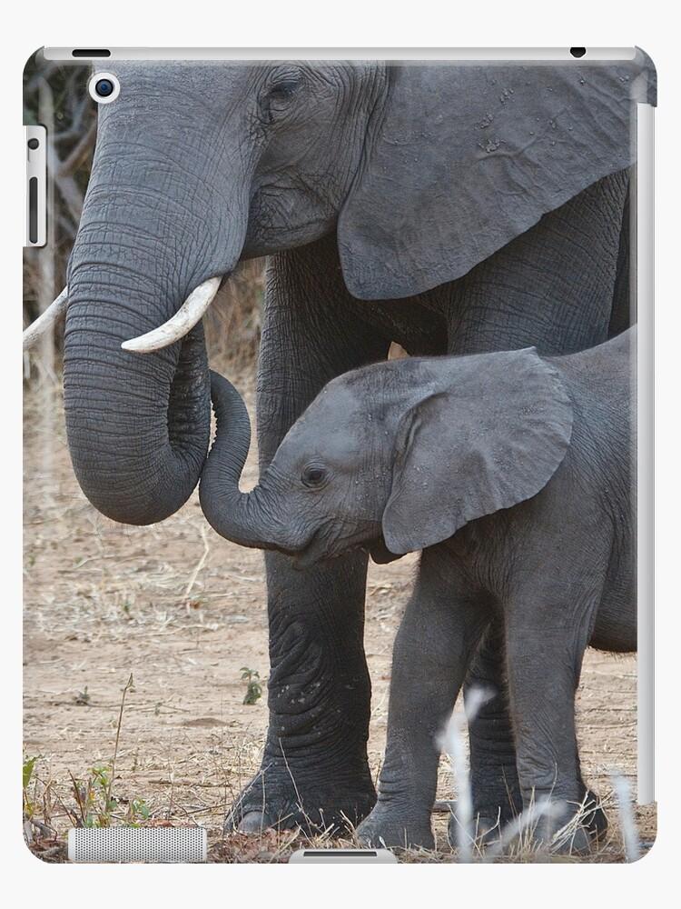 Liebe & Vertrauen - Mutter & Baby afrikanische Elefanten von Jensphotos