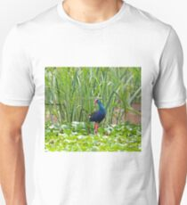 Purple Swamphen T-Shirt