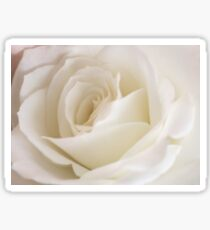 Beautiful White Rose Close Up Sticker