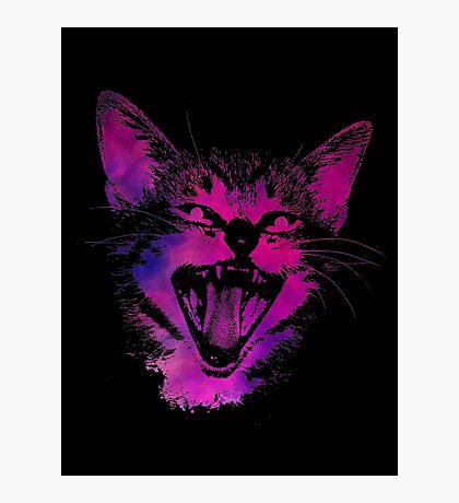 Cat black Photographic Print