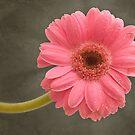 Pink Face by John Edwards