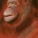 Portrait of an Orangutan by Ray Cassel