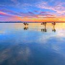 3 Trees - Wellington Point Qld Australia by Beth  Wode