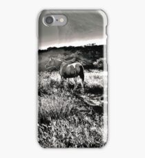 Dandy in the Texas Sunset, copyright 2015 ks iPhone Case/Skin