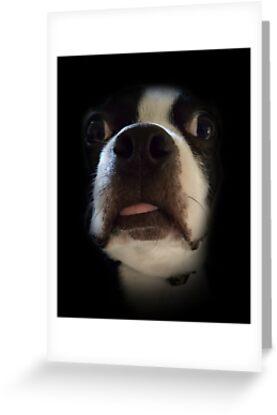 Bosco's Dumb Face by PrettymanX