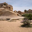 Beauty Among the Boulders by Lucinda Walter