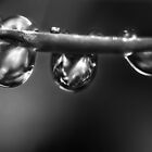 Droplets by Diogo Pereira