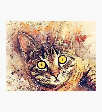Cat Tigger Photographic Print