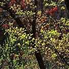 Spring Foliage in Color by Gilda Axelrod