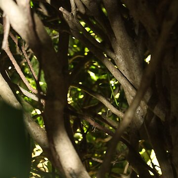 Rebirth at Winter's End by jessicahannan81