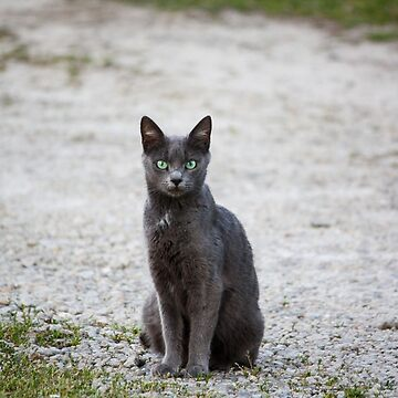 Silent Smoke Summons Souls by jessicahannan81