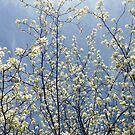Spring Awakening by BWootla