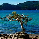 A Tree in the Sea Landscape by Adam Calaitzis