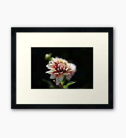 Love For Dahlia Framed Print