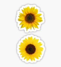 Two Sunflowers Sticker