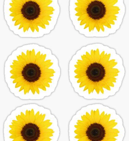 Six Sunflowers Sticker