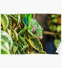 Exotic Reptile Poster