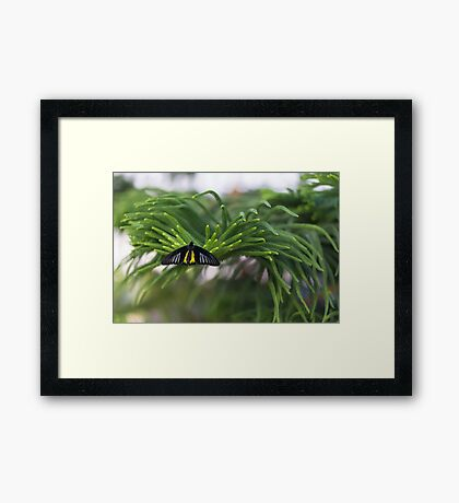 Dark Wings Framed Print