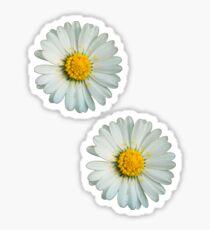 Two white daisies Sticker