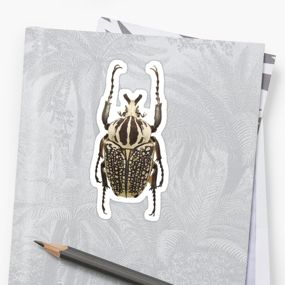 scarab  by ghjura