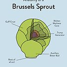 Sprout by Stephen Wildish