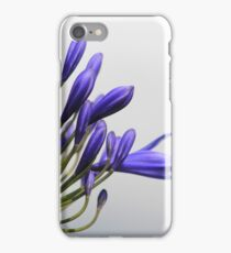 Agapanthus flower iPhone Case/Skin