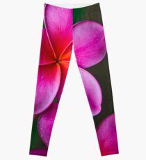 Pink Plumeria 1080 Leggings