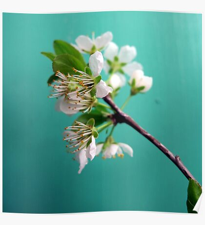 Still Life with Spring Poster
