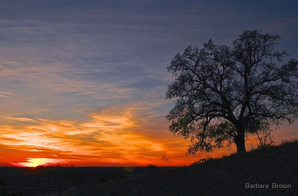 Sunset in the Hills by Barbara  Brown