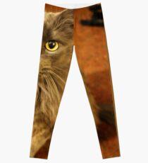 Gold Eyes Leggings