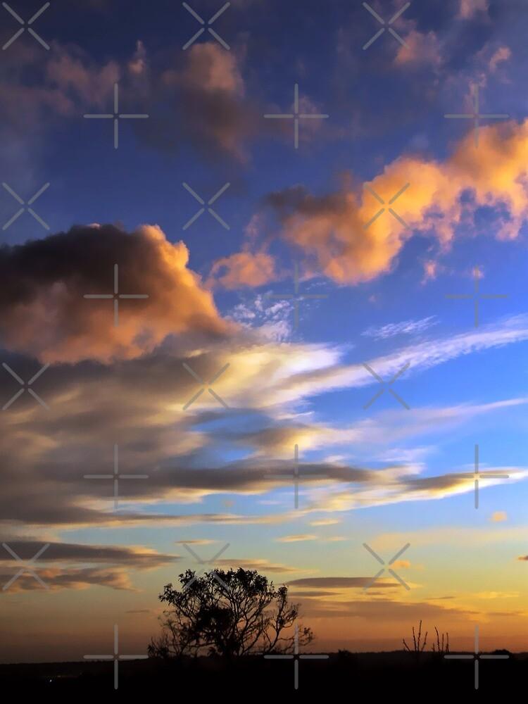 Skyscapes : Ferntree Gully by webgrrl