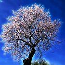 Almond Tree by julie08