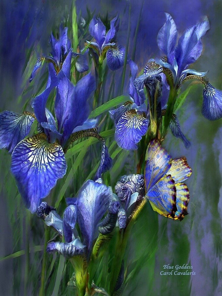 Blue Goddess by Carol  Cavalaris