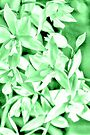 Cascading orchids - Green by PhotosByHealy
