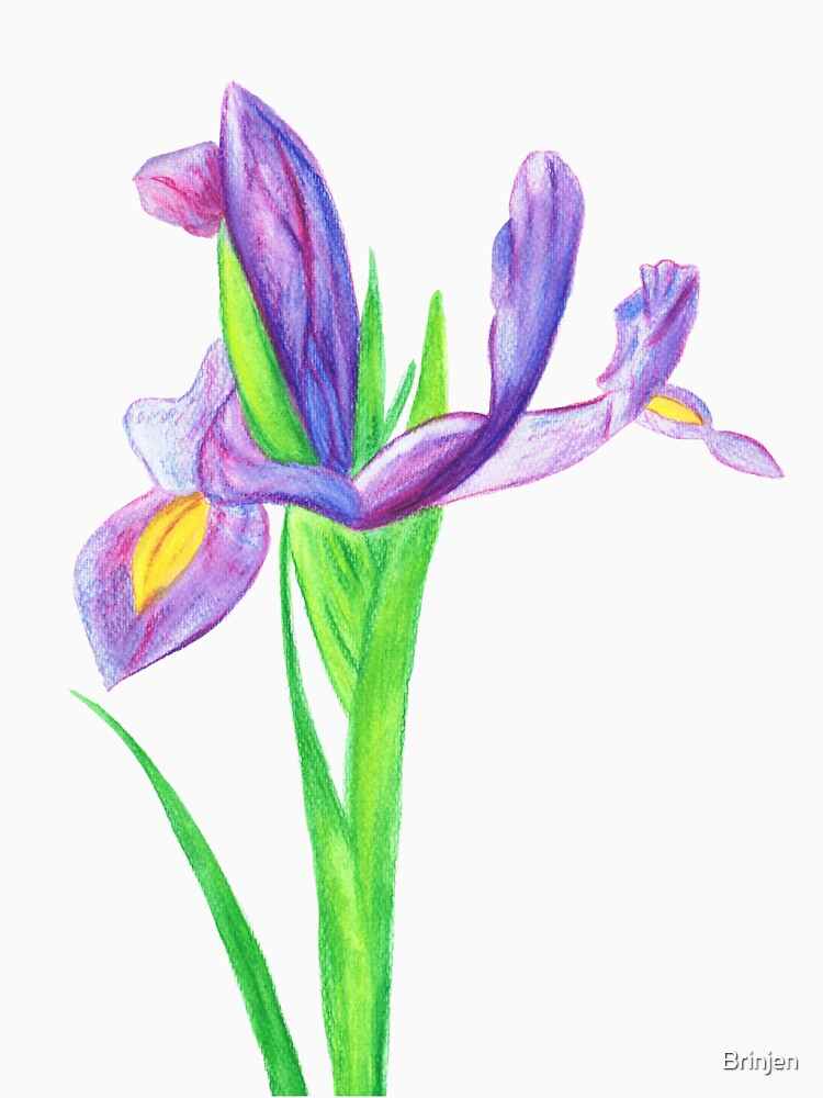 Iris in Watercolour Pencil by Brinjen