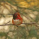 Rufous Kolibri von Peggy Collins