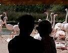 Watching the Flamingos by David Carton