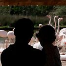 Watching the Flamingos by David Carton