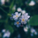 Forget Me Nots  by sharenmak