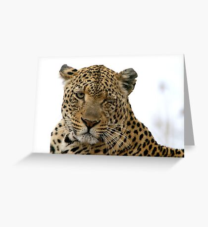 Can Leopards Wink? Greeting Card