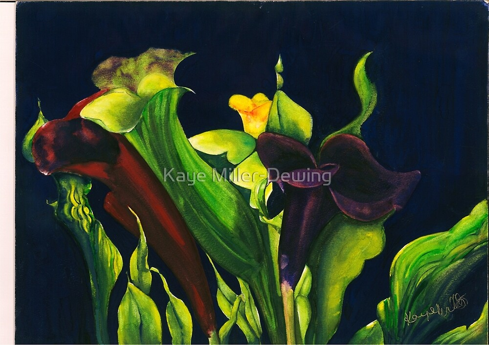 Midnight Lilies by Kaye Miller-Dewing