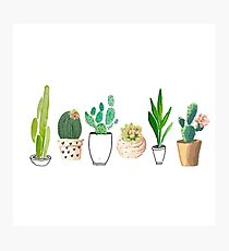 POTTED CACTI Photographic Print